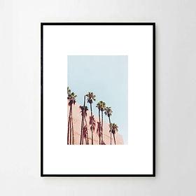 Palmiers disarus2.jpg
