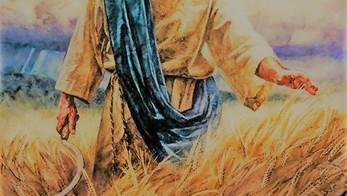 Il tempo dell'Harvest (raccolto) è vicino