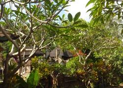 Nike House - view of garden