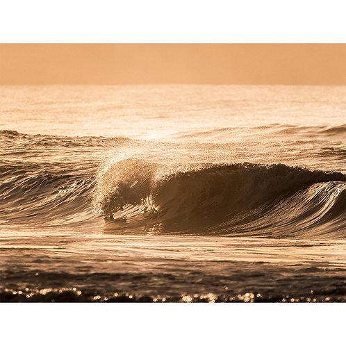 Fotografia | Dourada
