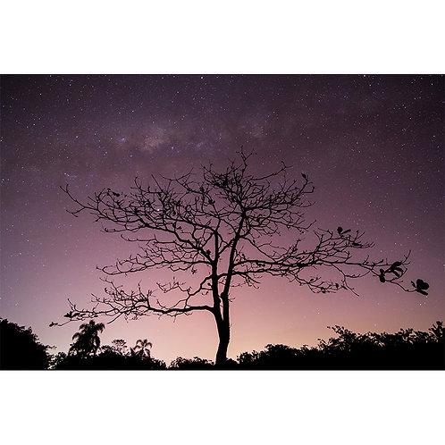 Fotografia | Noite Brilhante
