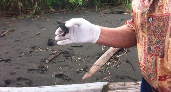 Helping sea turtles