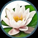Circle-Nenuphar-Flower.png