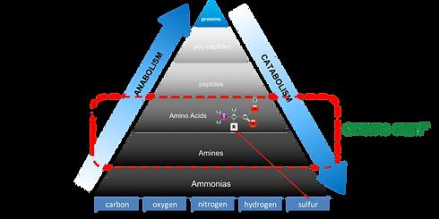 Sargo Enviro-Chem H2S neutralization process