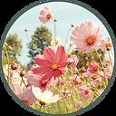 Circle-Prairie-Flower.png