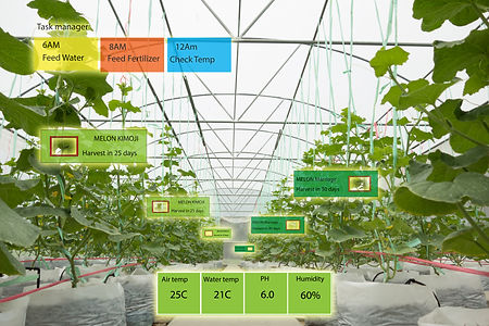 Smart agriculture concept, Agronomist or