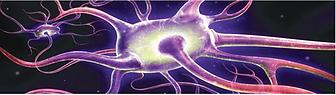 Neuron11118885207777777.png