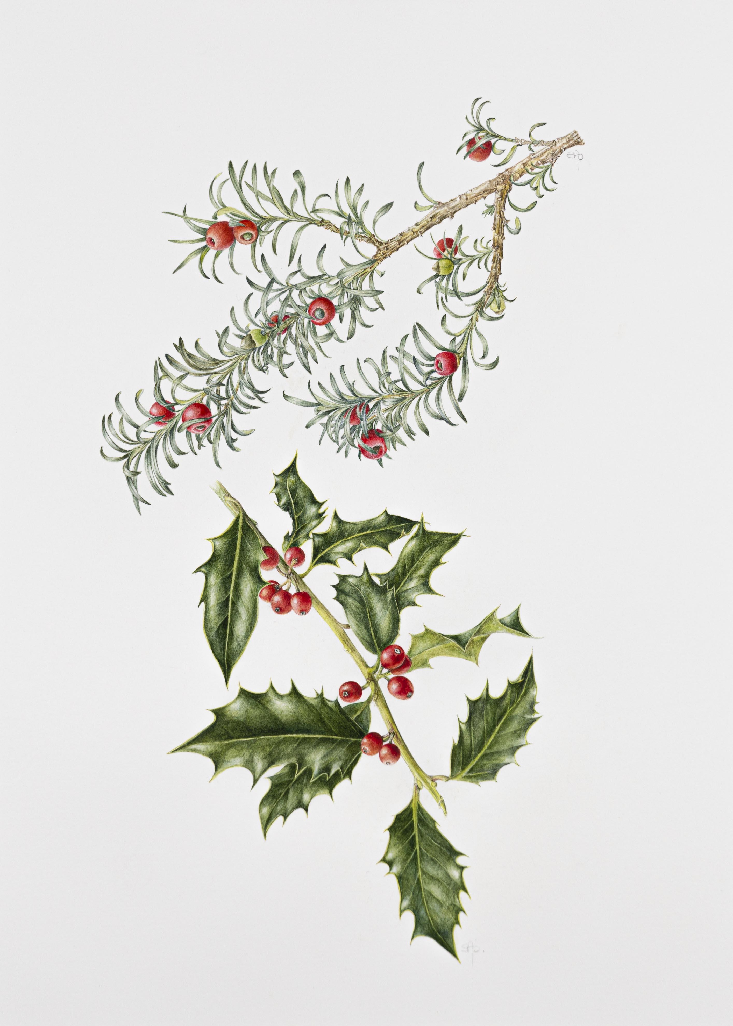 Ilex aquifolium and Taxus baccata