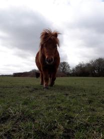 Posing Pony