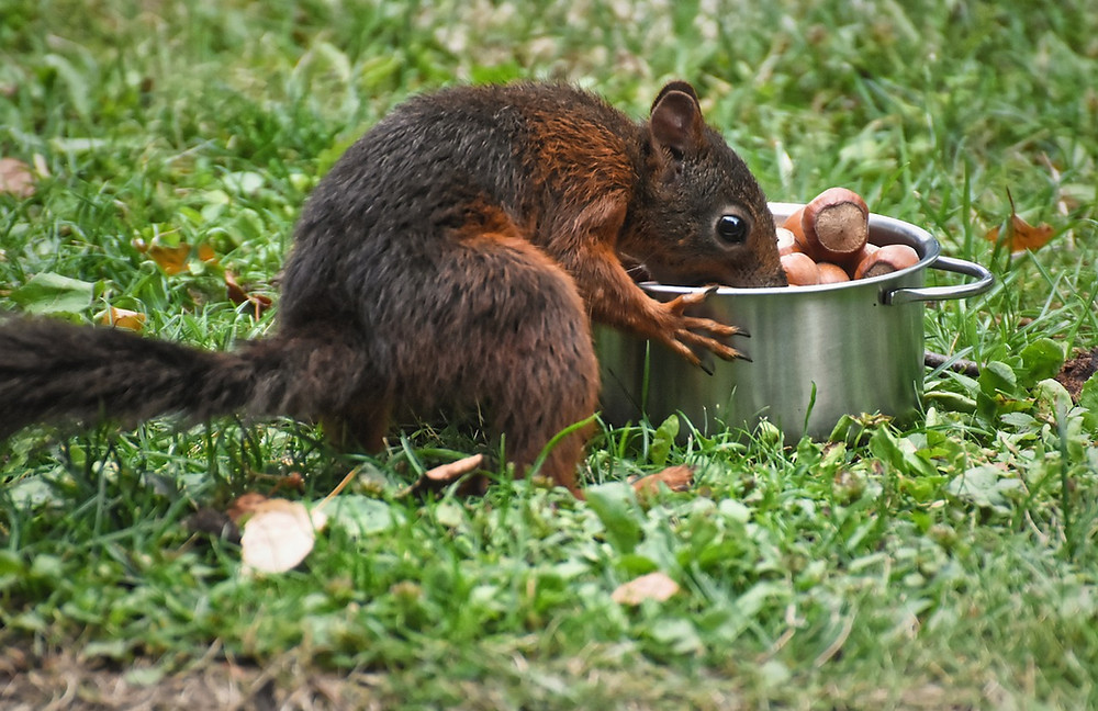 All mine! Squirrel has a pot full of nuts.