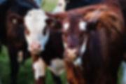 vial-livestock.jpg