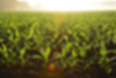 vial-crop.jpg