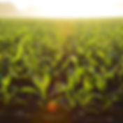 Farm or agriculture insurace.