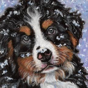 Baby Snow Bernie
