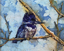 Kingfisher Siesta