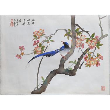 Blue Bird Resting on a Cherry Tree