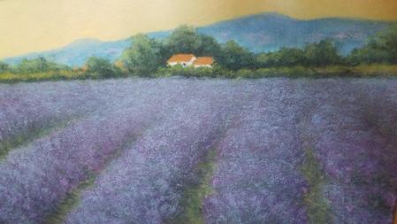 Sun Setting on Lavender Field, Provence