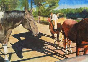 Horses & Shadows