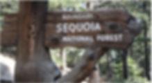 sequoia forest.jpg