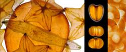 Triptico naranja.jpg