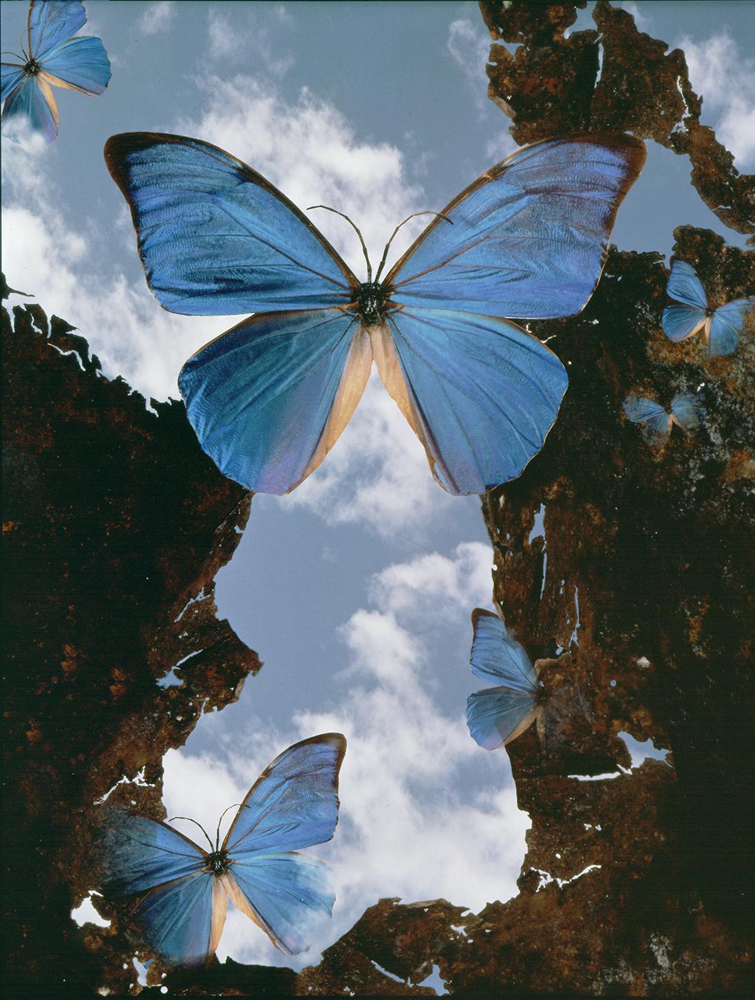 Buterfly in blue