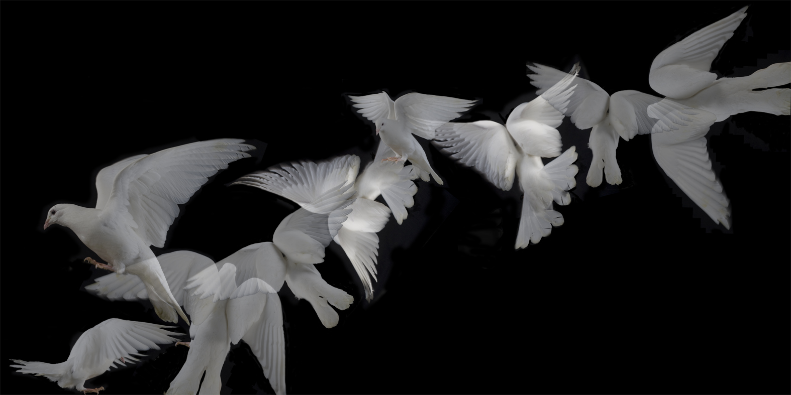 Wavering doves