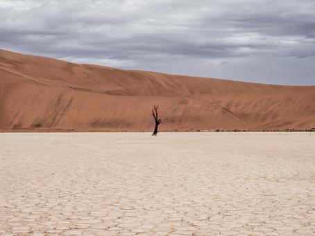 Surviving the Pre-Licensed Desert: