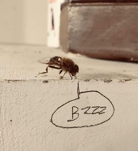 Bzz.. life in lockdown