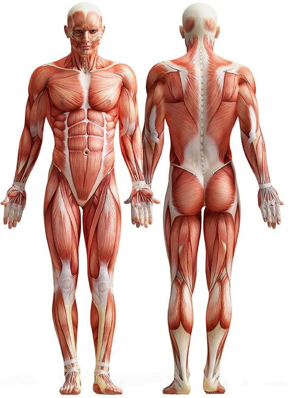 body pic.jpg