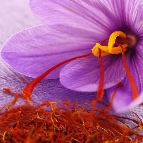 Saffraan, een goed onderzocht 'geneesmiddel'