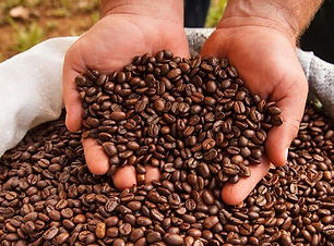 Visit the Doka Estate Coffee Tour coffee plantation