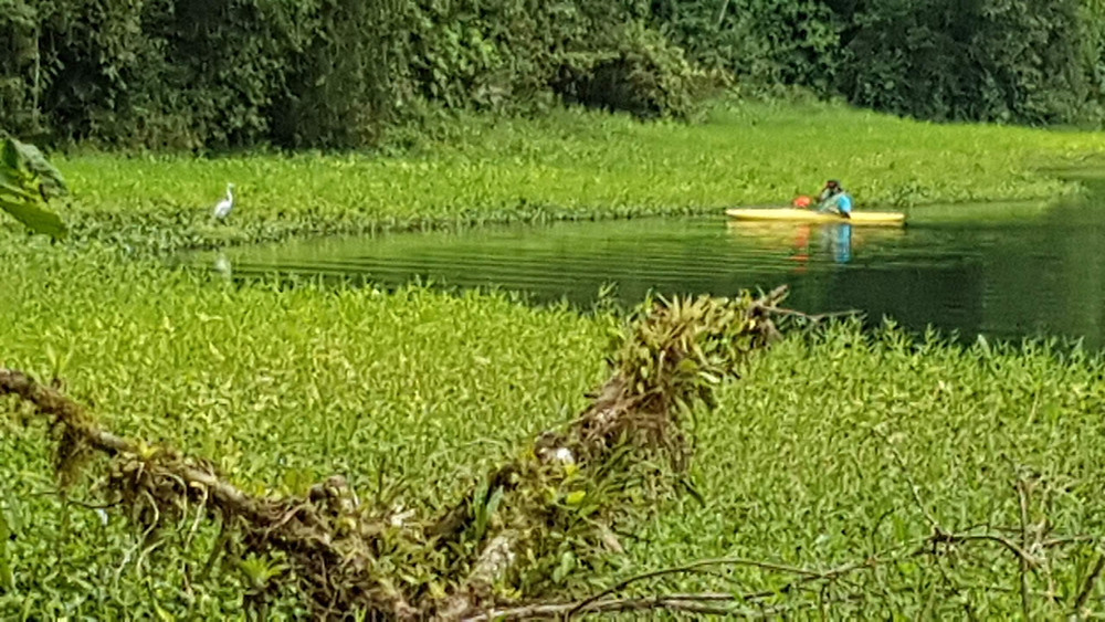 Un canoé kayak sur le lac de la Laguna de Hulé Costa Rica
