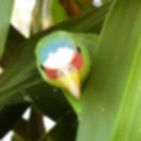 Perroquet dans le jardin de Tacacori Ecolodge