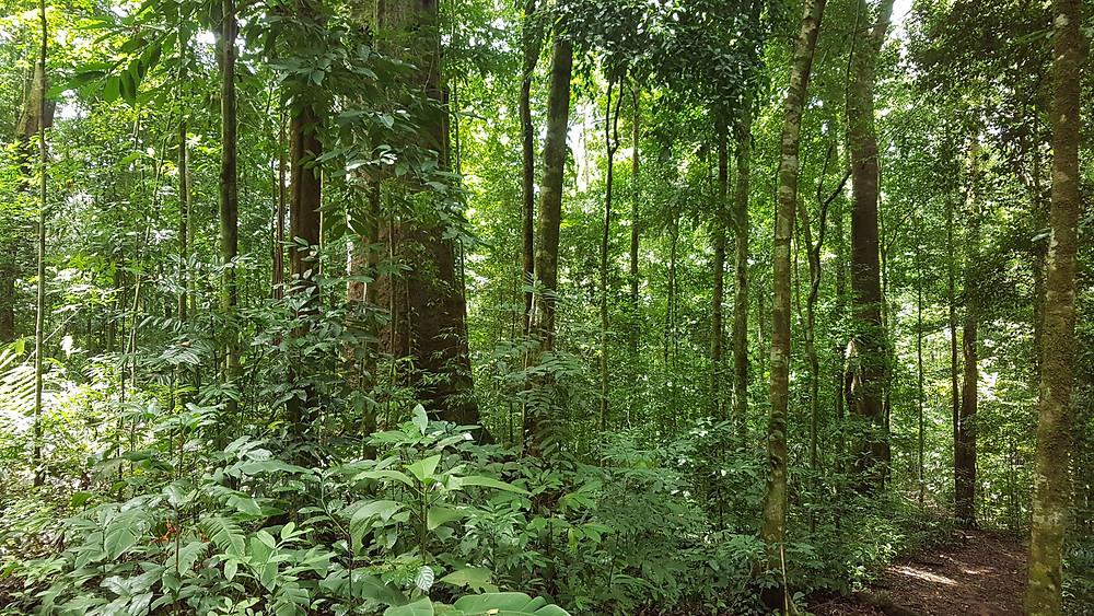 Une forêt au Costa Rica. Energie des arbres