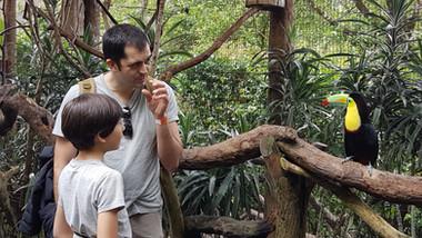 Découverte des toucans à La Paz waterfall Gardens