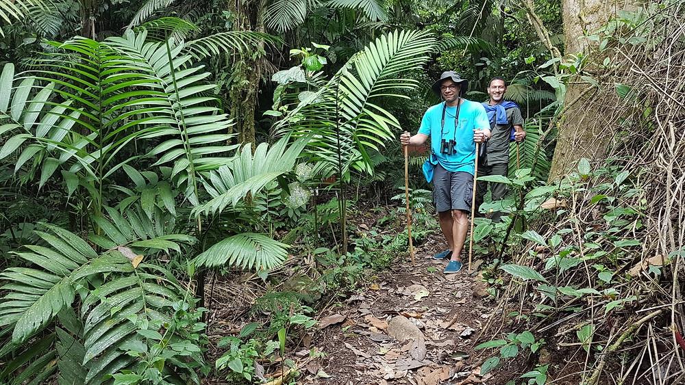 Treck dans la forêt Costa Rica