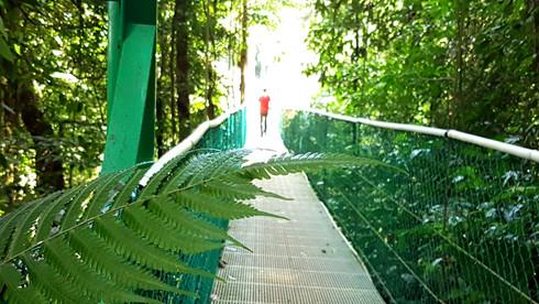 Les ponts suspendus au volcan Arenal
