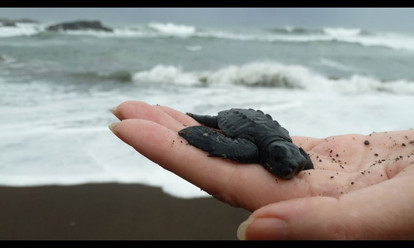 turtle/tortue/tortuga