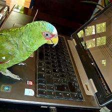 un perroquet sur un ordinateur