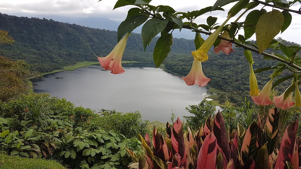 cratère d'un volcan, lac et fleurs tropicale