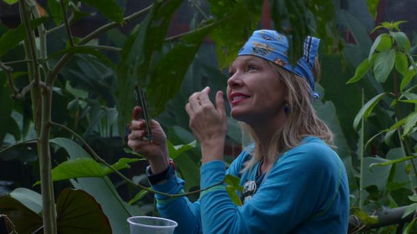 Immersion au coeur de la forêt tropicale