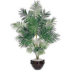 Areca Silk Palm Tree