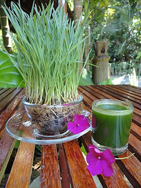 The Spa Wheat Grass
