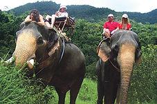 Kohchang elephant treking