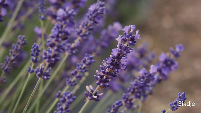 Aromatherapy dates back to ancient times