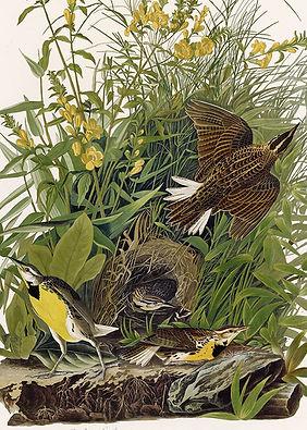 J.J. Audubon The Birds of America