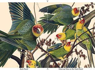 """John James Audubon's """"Carolina Parakeet"""" Limited Edition Set of 6 ArtCards"""