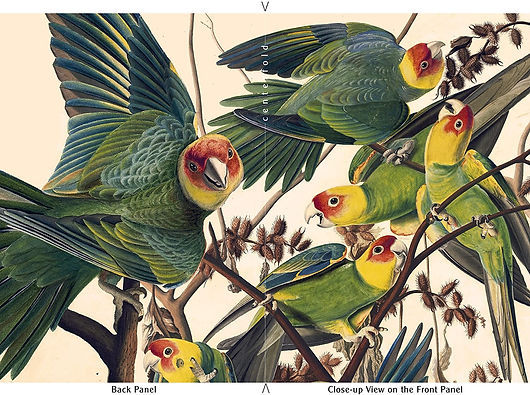 "John James Audubon's ""Carolina Parakeet"" Limited Edition Set of 6 ArtCards"