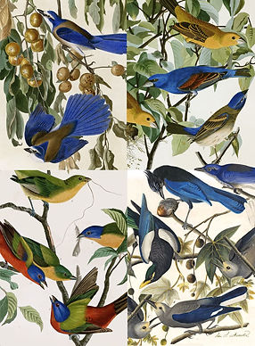 "J.J. Audubon's ""The Birds of America"" ArtCard Variety Pack"