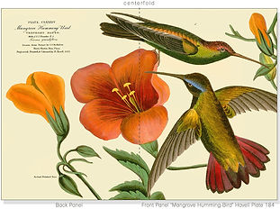 "J.J. Audubon ""Birds of America"" ArtCards: Hummingbirds"